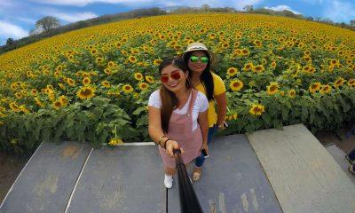 Campos de flores más instagrameables de México Foto El Campo de Girasoles