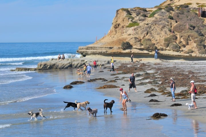 Dog Beach Foto James G