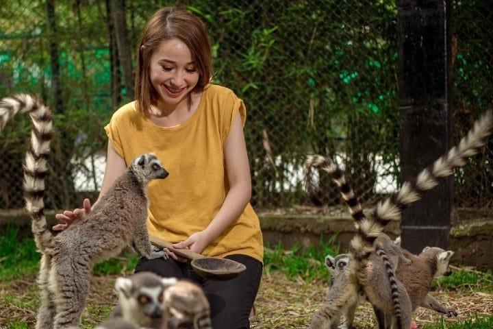 En el parque se puede convivir y alimentar a los lémures Foto Loroventura