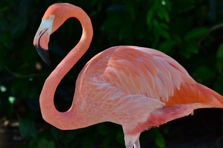 Flamingo en Kissimmee Foto Archivo