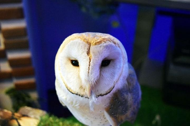 Lugares pet friendly del mundo. Forest of Owl Foto: Archivo
