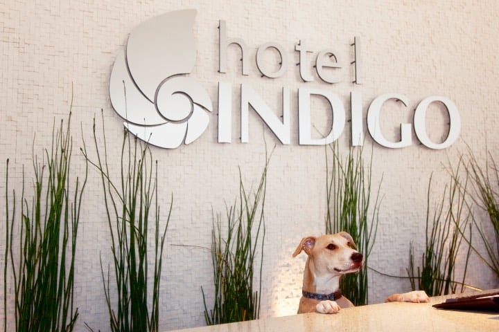 Hotel Indigo San Diego pet friendly Foto San Diego Humane Society
