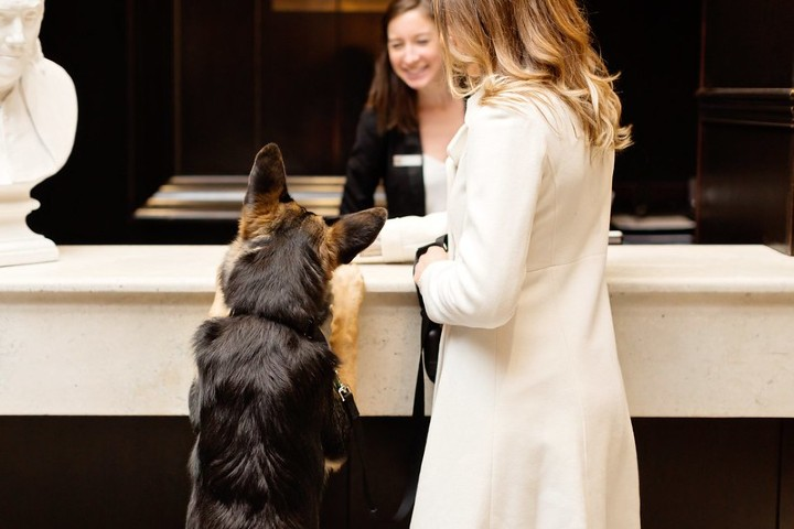Hoteles pet friendly. Foto: Maria Diaz