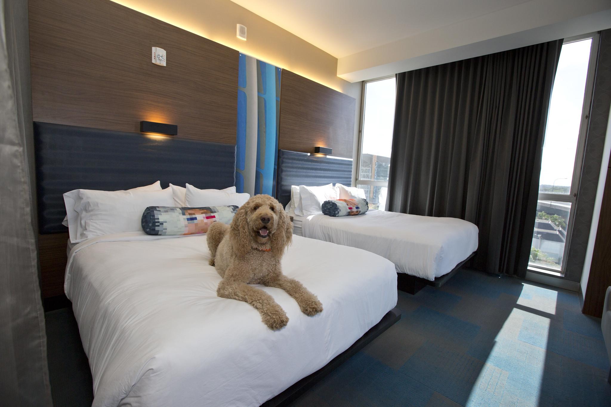 Hoteles pet friendly. Foto Pet Friendly florida