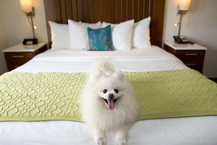 Hoteles pet friendly. Foto:Pet friendly Florida