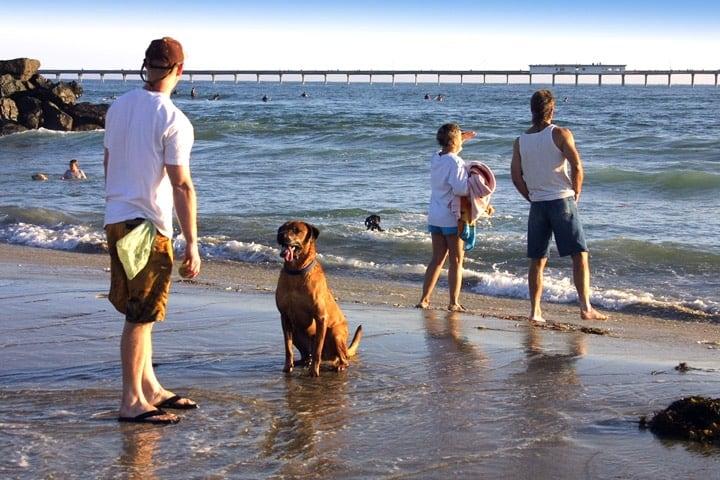 Ocean Beach – Dog Beach Foto JoanneDiBona SanDiego.org