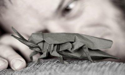 Origami Foto Rafael Rodrigo Perurena