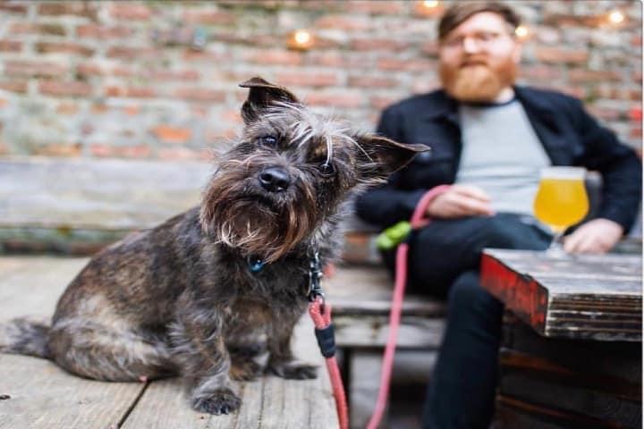 Perro con su dueño en Luckydog. Foto: Luckydog Facebook