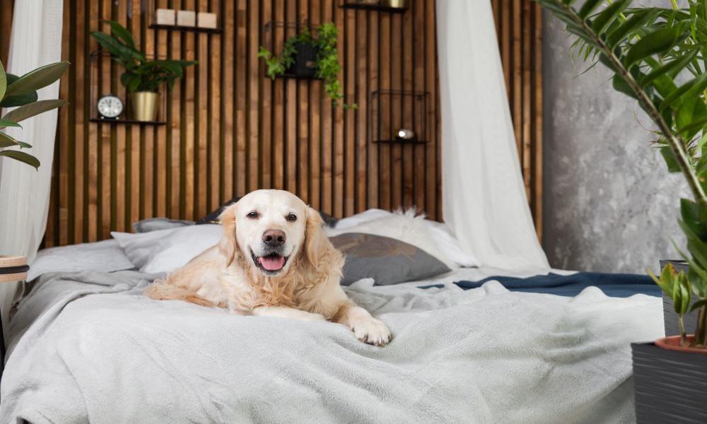 Perro descansando en hotel Foto Shutterstock