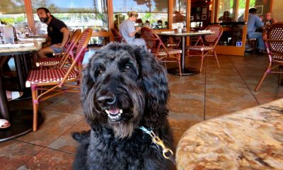 Perro en restaurante Foto Bennilover