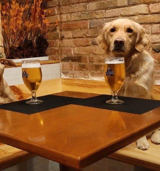 Perros en EntreDogs Café, uno de los mejores lugares pet friendly del mundo Foto DonnutBirra