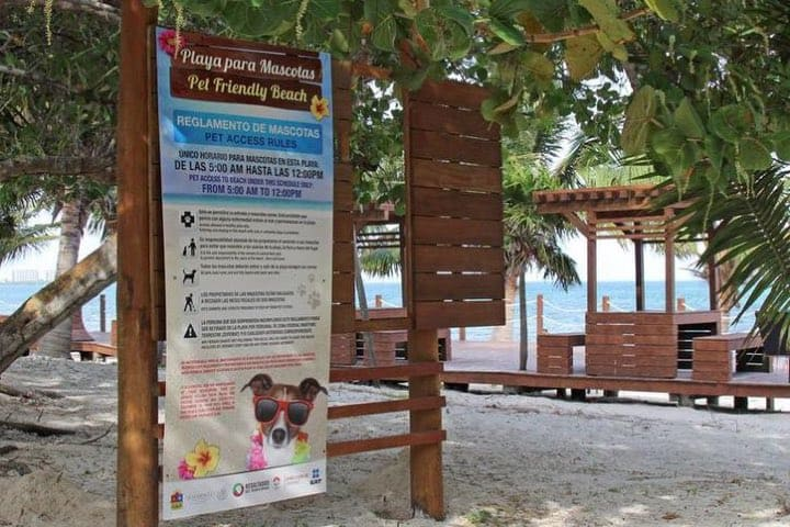 Playa Coral primera playa pet friendly en México