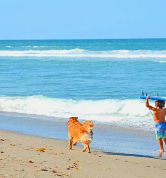 Playas pet friendly en México. Foto: Archivo