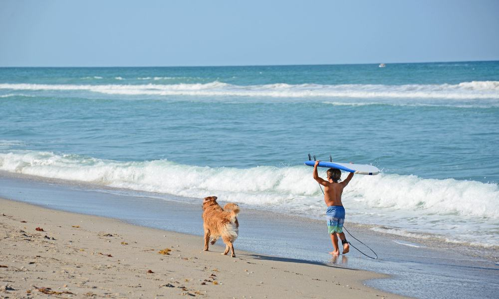 playa pet friendly Foto Archivo