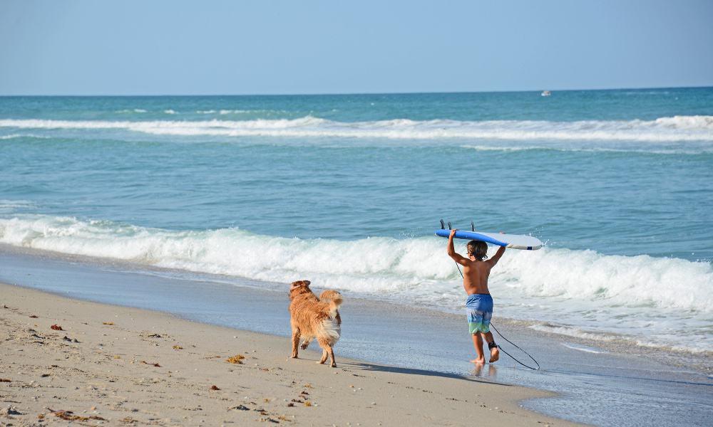 playa pet friendly Foto Archivo