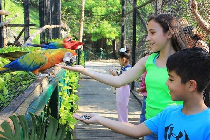 Aves. Foto Parque Loroventura.