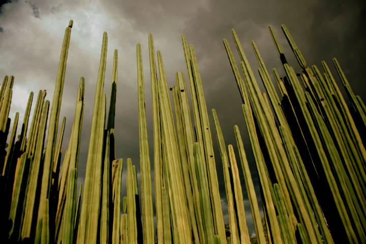 Clima de Oaxaca. Foto. tamara garcevic 4