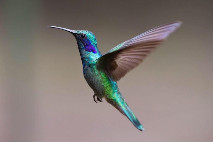 La leyenda del colibrí maya es sigue viva hoy en día Foto: Pixabay