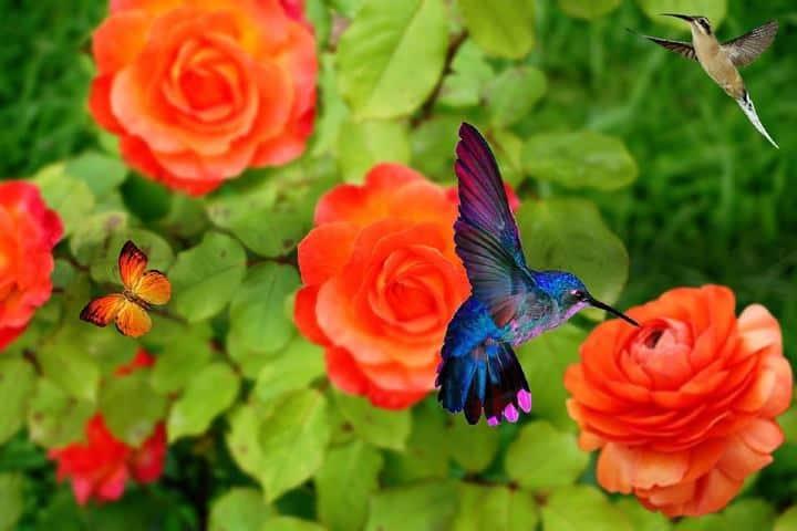 Cuando veas un colibrí recuerda la leyenda maya Foto: Pixabay