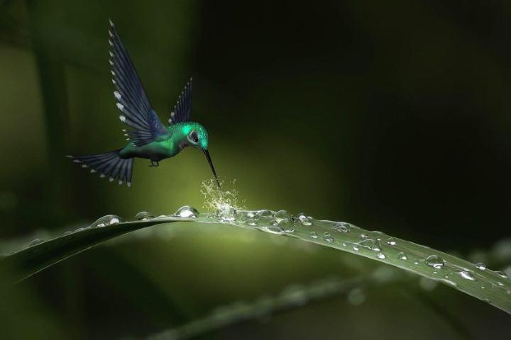 ¿Ya conocías la leyenda del colibrí maya? Foto: pixabay