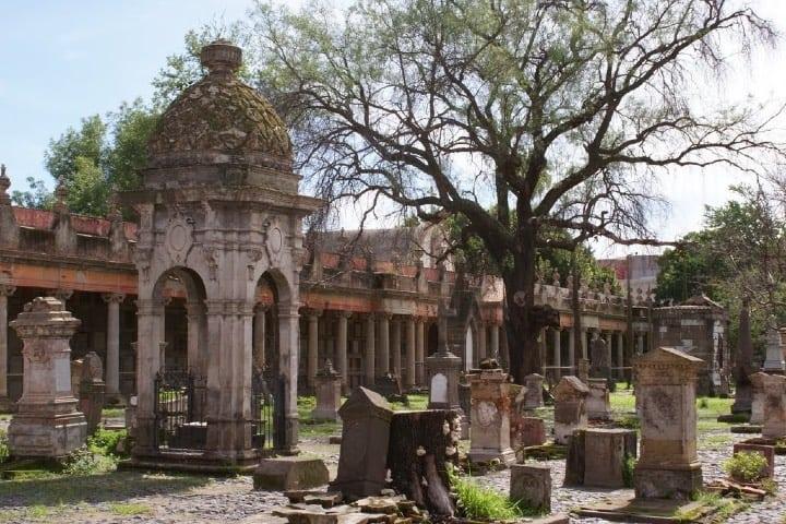 El árbol del vampiro se encuentra en el Panteón de Belén Foto_ Archivo