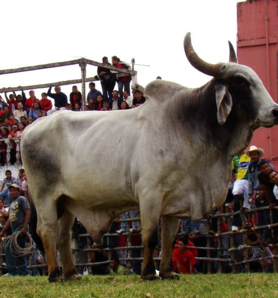 Fiestas y ferias en Tlacotalpan. Foto: Tonatiuh Mendez Carrizosa