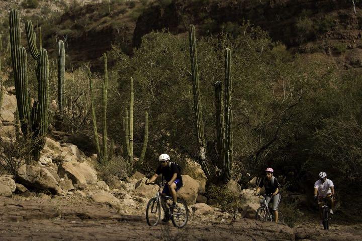 En Baja California Sur se práctica ciclismo de montaña Foto: Forbes