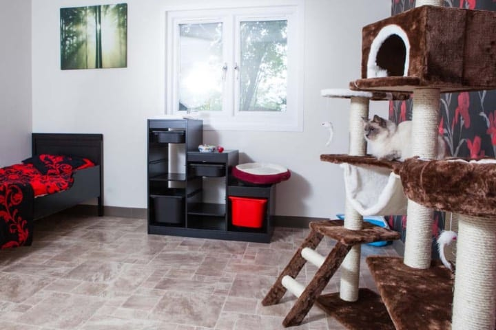 Hotel Cat ofrece sus servicios para cuidar a los gatos de enfermos de COVID Foto Hotel Cata