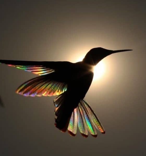 Leyenda del colibrí maya Foto mxcity