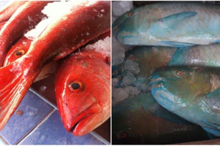 Lo que puedes adquirir en el Mercado del Mar Foto Riviera Nayarit Blog