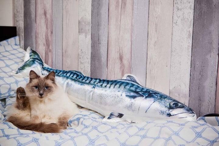 Los gatos tendrán todos los cuidados Foto Hotel Cat