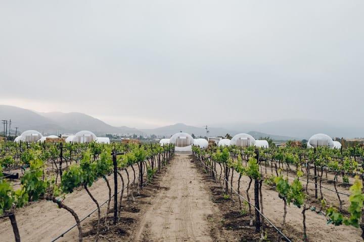Pasear por los viñedos está al alcance de las burbujas Foto Campera Hotel