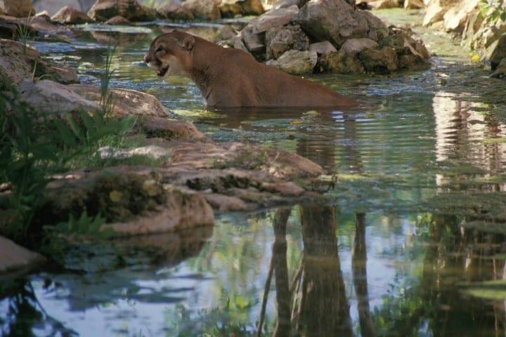 Animales salvajes en la Reserva de Sian Ka'an Foto: Comisión Natural de Áreas Naturales Protegidas