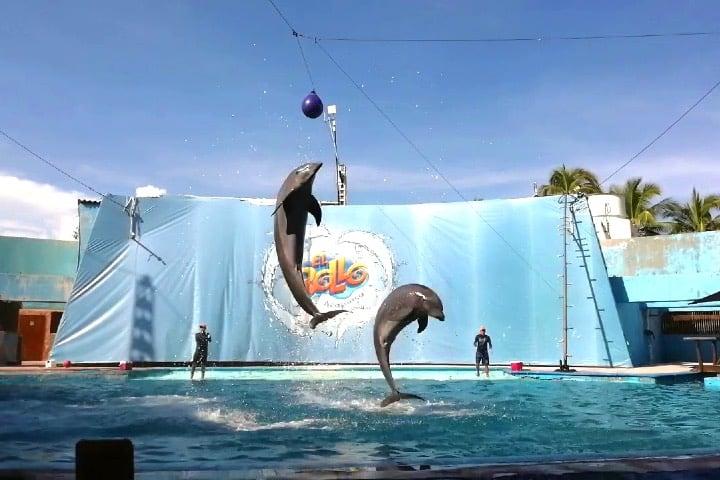 Show de delfines en Parque Acuático El Rollo
