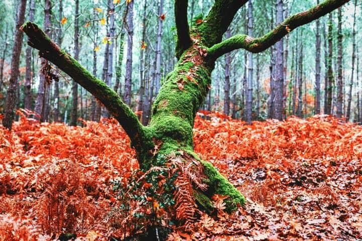 Un árbol en el que se encierran almas de niños (imagen ilustrativa) Foto Pixabay