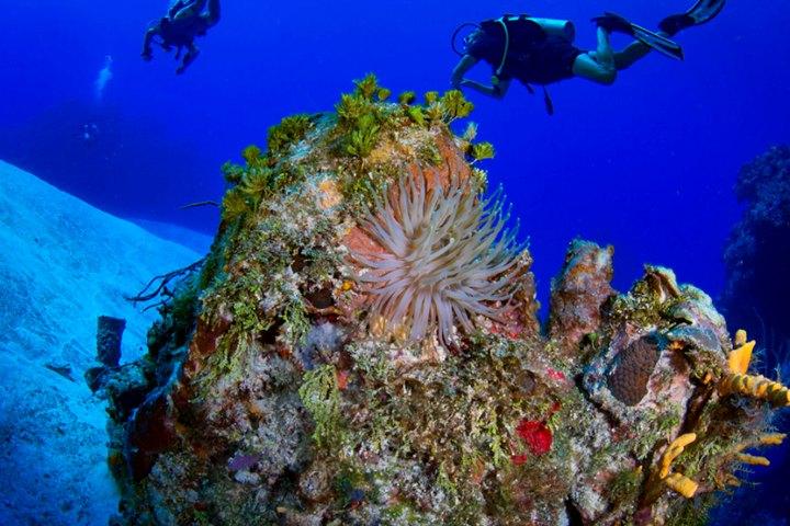 Arrecife en Cozumel. Foto Barnacle Barrett.