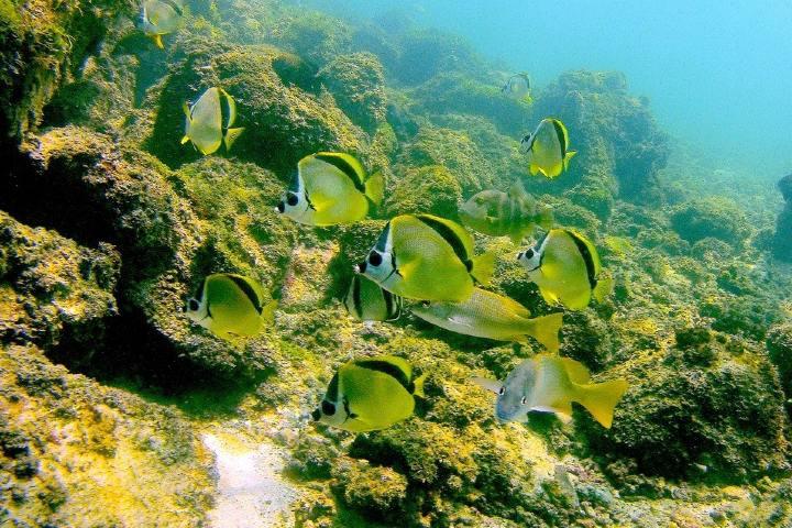 Disfruta de la Isla Coral en Rincón de Guayabitos Foto: Archivo