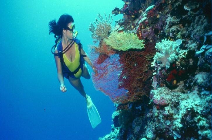 Buceo en Baja California- Pinterest