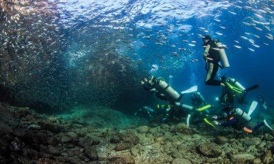 Buceo en Loreto, Baja California Sur Foto: Visit Baja Sur