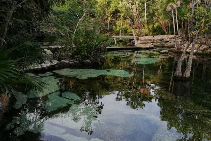 Cenotes - Foto Luis Juárez J