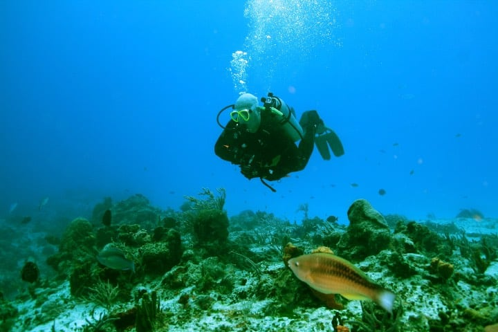 Cozumel reactiva sus puertas al turismo Foto Don Russ