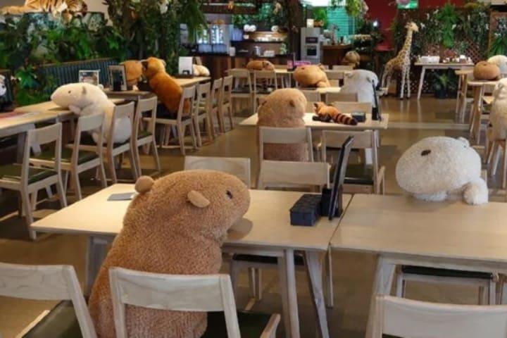 Disfruta de la compañía de los capibara en este café de Japón Foto @chacha0rca | Twitter