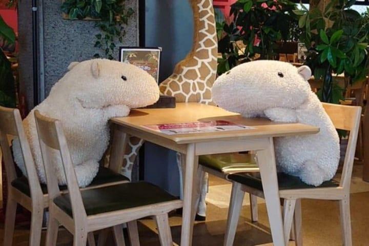 Disfruta de la compañía de un capibara en un café de Japón Foto @chacha0rca | Twitter