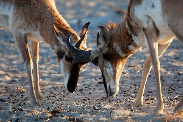 Fauna del Vizcaíno Foto: CONANP