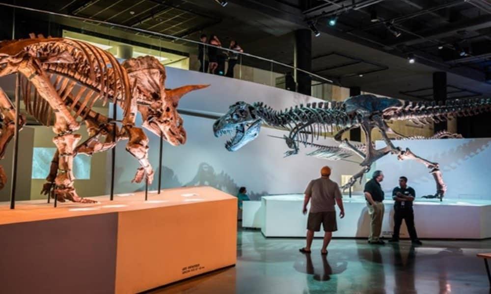 Houston Museum of Natural Science Foto Visit Houston