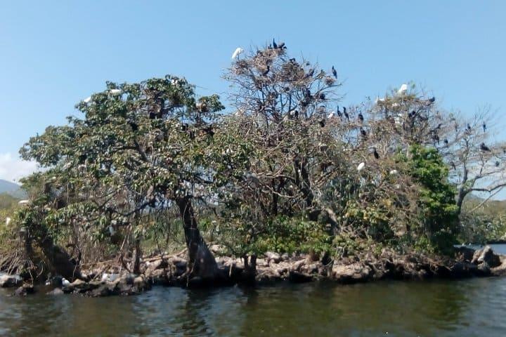 ¿Qué actividades hacer en la Laguna de Catemaco? Ve a la Isla de las Garzas Foto: Catemaco Veracruz y Los Tuxtlas