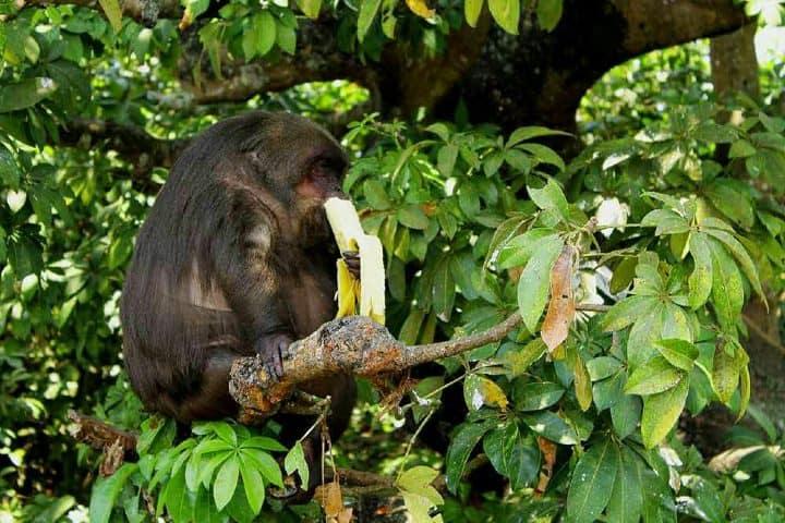 Isla de los Monos Foto: Catemaco Veracruz y Los Tuxtlas