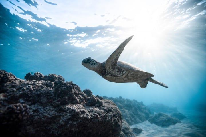 Los nidos de Tortuga Marina en Cozumel aumentaron en este 2020 Foto: Pexel