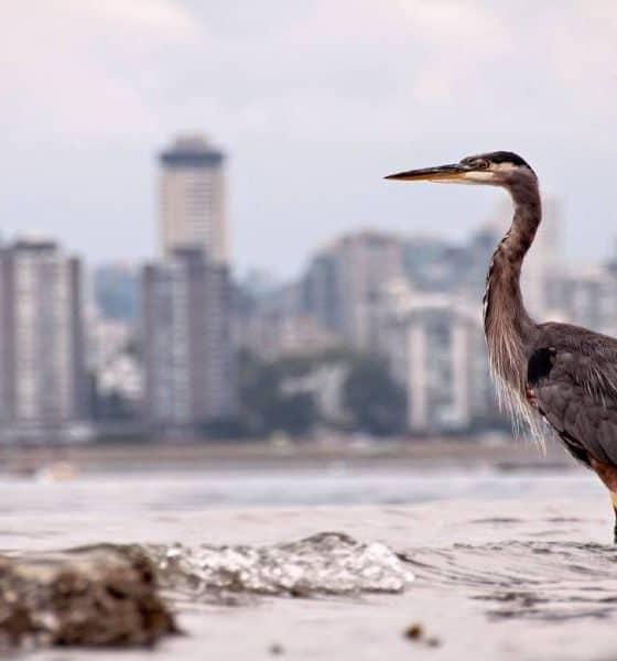 La naturaleza regresó Foto: Agencias inc