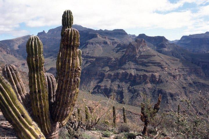 Reserva de la Biosfera del Vizcaíno En Baja California Sur Foto Fernando E de la Torre